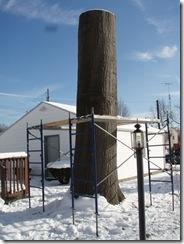 Big oak Indian 003