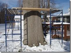 Big oak Indian 004