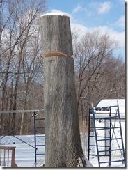 Big oak Indian 006