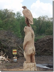 Bear an eagle in Ohio 024