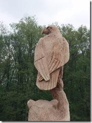 Bear an eagle in Ohio 026