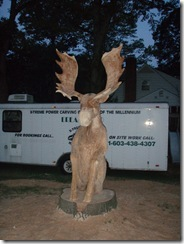 Moose and yard 004