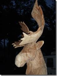 Moose and yard 007