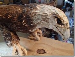 Eagle 028