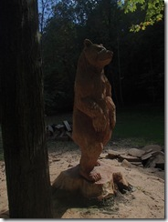 Bad red oak bear 008