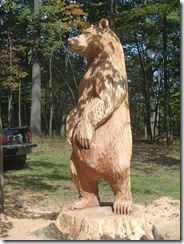 Bad red oak bear 011